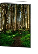 Christopher Fridley Greeting Cards - Spruce Burl Forest Greeting Card by Christopher Fridley
