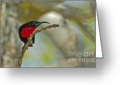 Exotic Bird Greeting Cards - Stealth Attack Greeting Card by Ashley Vincent