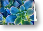 Blues And Greens Greeting Cards - Succulent Blue on Green Greeting Card by Sharon Beth