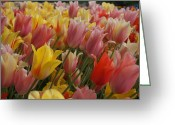 Brian Jones Greeting Cards - Sultans of Spring Tulips Greeting Card by Brian Jones