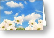 Blooms Photo Greeting Cards - Summer Daisies Greeting Card by Christopher Elwell and Amanda Haselock