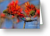 Exotic Bird Greeting Cards - Sunbird on Coral Greeting Card by Ashley Vincent
