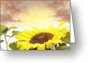 Sunshine Daisy Greeting Cards - Sunflower  Greeting Card by Les Cunliffe