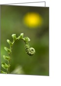 Woodlands Greeting Cards - Sunrise Spiral Fern Greeting Card by Christina Rollo
