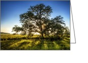 Beam Greeting Cards - Sunset Oak Greeting Card by Scott Norris