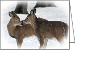 White Tailed Deer Greeting Cards - Tender Sentiment Greeting Card by Christina Rollo