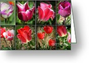 Caputo Greeting Cards - The Beauty of Tulips Greeting Card by Dora Sofia Caputo