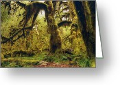 Dark Moss Green Photo Greeting Cards - The Deep and The Dark Greeting Card by Stuart Deacon
