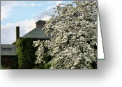Trees Blossom Greeting Cards - The Dogwood  Greeting Card by JC Findley