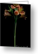 Lilies Greeting Cards - The Lily Group Greeting Card by Nancy TeWinkel Lauren