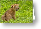 Khao Greeting Cards - The Markings of Youth Greeting Card by Ashley Vincent