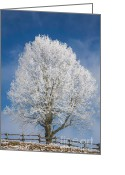 Grand Memories Greeting Cards - The Sentry Greeting Card by John Haldane