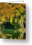 Fall Photographs Greeting Cards - The Sound of Silence Greeting Card by Ester  Rogers
