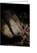 Forest Floor Photo Greeting Cards - The Still Of The Light Greeting Card by Odd Jeppesen