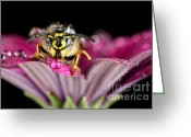 Beauty Mark Greeting Cards - The Visitor Greeting Card by Mark Johnson