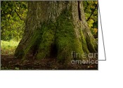 Old Tree Trunk Photo Greeting Cards - Thick Tree Trunk Greeting Card by Jolanta Prunskaite