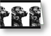 Hunting Dogs Greeting Cards - Three Black Labs in a Row Greeting Card by Jennie Marie Schell