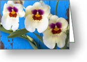 Cracks Greeting Cards - Three Exotic Orchids Greeting Card by Garry Gay