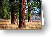 Spokane Greeting Cards - Three old friends Greeting Card by Ana Lusi