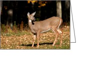 White Tailed Deer Greeting Cards - Timeless Thought Greeting Card by Christina Rollo