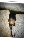Granite Walls Greeting Cards - Toad in the Wall Greeting Card by K Hines