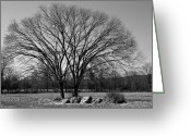 Central Jersey Greeting Cards - Tree and Mountain Greeting Card by Steven Richman