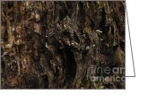 Old Tree Trunk Photo Greeting Cards - Tree Bark Greeting Card by Jolanta Prunskaite