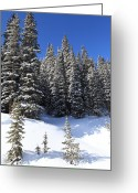White River Greeting Cards - Trees Greeting Card by Eric Glaser