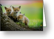 Fox Greeting Cards - Trio of fox kits Greeting Card by Everet Regal
