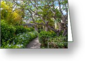 Beautiful Tree Greeting Cards - Tropical Garden.Mauritius Greeting Card by Jenny Rainbow