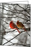 Red Bird Greeting Cards - TRUE LOVE CARDINAL BIRDS Northern Cardinal Birds Male and Female Roosting Greeting Card by Peggy  Franz