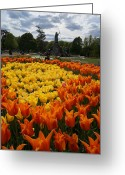 Brian Jones Greeting Cards - Tulip El Nino and Yellow Lily a Greeting Card by Brian Jones