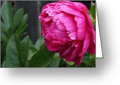 Mick Anderson Greeting Cards - Two Ants on a Peony Greeting Card by Mick Anderson
