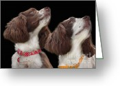 Purebreed Greeting Cards - Two spaniels Greeting Card by Linsey Williams