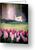 Grace Greeting Cards - Two Swans Greeting Card by Jasna Buncic