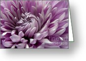 Purple Garden Greeting Cards - Untabgling Greeting Card by Dan Holm