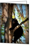 Black Bear Climbing Tree Greeting Cards - Up A Tree Greeting Card by Valarie Davis