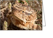 Horned Lizard Greeting Cards - Up Close and Personal  Greeting Card by Christena  Stephens