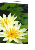 Lotus Full Bloom Greeting Cards - Waterlilies in pond Greeting Card by Amber Nissen