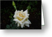 Jeff Moose Greeting Cards - While the Dew is Still on the Roses Greeting Card by Jeff Moose