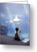 Staring Greeting Cards - White Shark and Young Boy Greeting Card by David Smith