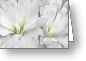 Star Magnolias Greeting Cards - White Star Magnolia Flowers Greeting Card by Jennie Marie Schell