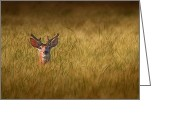 North American Greeting Cards - Whitetail Deer in Wheat Field Greeting Card by Tom Mc Nemar