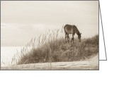 Dune Greeting Cards - Wild Horse on the Outer Banks Greeting Card by Diane Diederich