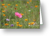 Kathy Gibbons Greeting Cards - Wildflowers Greeting Card by Kathy Gibbons