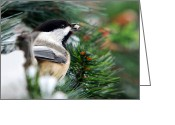 Little Bird Greeting Cards - Winter Chickadee Greeting Card by Christina Rollo