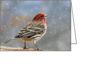 House Finch Greeting Cards - Winter Finch Greeting Card by Christina Rollo