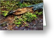 Rocky Mountain National Park Greeting Cards Greeting Cards - Wuz tree Greeting Card by Jon Burch Photography