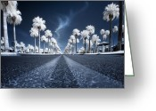 Palm Trees Greeting Cards - X Greeting Card by Sean Foster