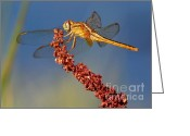 Carol Groenen Greeting Cards - Yellow Dragonfly on Brown Reed Greeting Card by Carol Groenen